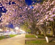Vista urbana di notte con il fiore di ciliegia giapponese Immagini Stock