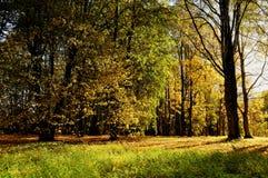 Vista variopinta del paesaggio di autunno del paesaggio soleggiato di autunno della foresta della foresta di autunno con gli albe Fotografia Stock