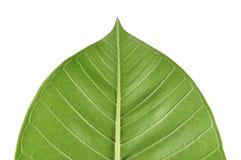 Vista verde del foglio Fotografia Stock
