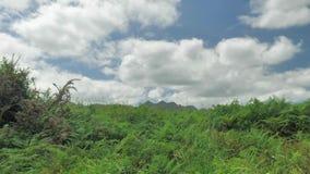 Vista verde del paesaggio della campagna nordica della Spagna, colline coperte di erba al giorno soleggiato di estate video d archivio