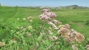Vista verde del paesaggio della campagna nordica della Spagna, colline coperte di erba al giorno soleggiato di estate stock footage