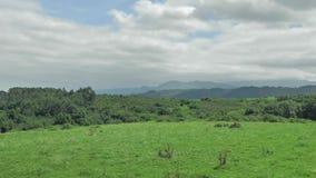 Vista verde del paesaggio della campagna nordica della Spagna, colline coperte di erba al giorno soleggiato di estate archivi video