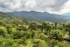 Vista verde in pieno degli alberi Fotografia Stock Libera da Diritti