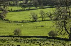 Vista verde - vales, prados e árvores, distrito máximo, Inglaterra, o Reino Unido Fotografia de Stock