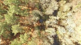 Vista vertical de uma floresta video estoque