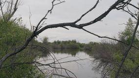 Vista vertical do pântano vídeos de arquivo