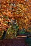 Vista verticale di bello percorso di autunno di Ermitage in Arlesheim Fotografie Stock Libere da Diritti