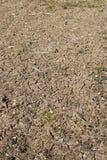 Vista verticale di suolo incrinato in giardino in campagna Fotografia Stock Libera da Diritti
