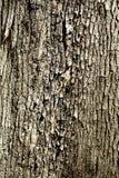 Modello della corteccia di albero Fotografia Stock Libera da Diritti