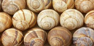 Vista vicina delle coperture del escargot nelle righe fotografia stock libera da diritti