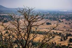 Vista vicina impressionante dell'albero asciutto nella cima della montagna rocciosa con il paesaggio rurale del fondo Fotografie Stock