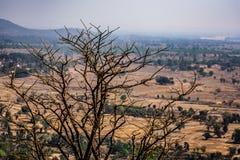 Vista vicina impressionante dell'albero asciutto nella cima della montagna rocciosa con il paesaggio rurale del fondo Fotografia Stock Libera da Diritti