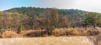 Vista vicina impressionante di una montagna di grenery vicino all'azienda agricola della risaia dopo la raccolta in mezzogiorno d Fotografia Stock