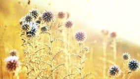 Vista vicina su paesaggio con i bei fiori nel campo sul fondo di alba stock footage
