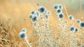 Vista vicina su paesaggio con i fiori selvaggi blu in prato Bella priorità bassa di autunno stock footage