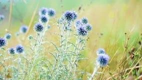 Vista vicina su paesaggio con i fiori selvaggi in prato Bella priorità bassa di estate stock footage