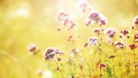 Vista vicina su paesaggio con i fiori selvaggi in prato Bella priorità bassa di estate archivi video