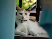Vista a você Animais bonitos do estilo de vida do gato no mundo inteiro Imagens de Stock
