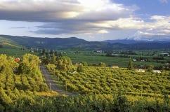 Vista von Hood River Valley mit Mt Haube ODER lizenzfreies stockfoto