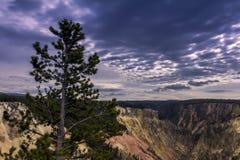 Vista Yellowstone Grand Canyon visto dall'artista Point Yellowston fotografia stock libera da diritti