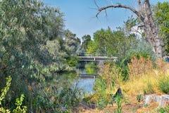 Vistas da ponte da trilha de Jordan River Trail Pedestrian e do trem com árvores circunvizinhas, azeitona de russo, cottonwood e  fotos de stock
