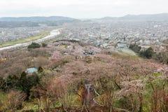 Vistas de flores de cerezo en Shiroishi RiversideHitome Senbonzakura o mil cerezos a primera vista y cordillera de Zao vista Foto de archivo libre de regalías