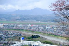 Vistas de flores de cerezo en Shiroishi RiversideHitome Senbonzakura o mil cerezos a primera vista y cordillera de Zao vista Fotos de archivo libres de regalías