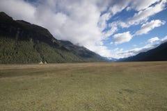 Vistas de las montañas y de las plantas de Nueva Zelanda d Y imágenes de archivo libres de regalías
