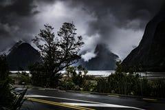 Vistas de las montañas y de las plantas de Nueva Zelanda d Y imagen de archivo libre de regalías
