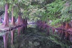 Vistas de los árboles y de los aspectos únicos de la naturaleza que rodean New Orleans, incluyendo piscinas de reflejo en los cem imágenes de archivo libres de regalías