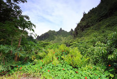 Vistas dos jardins de Limahuli, ilha de Kauai Fotografia de Stock