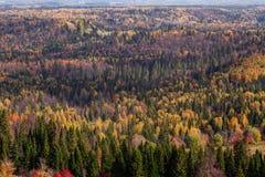 Vistas imponentes del bosque ruso de conífero y de árboles de hojas caducas en el período de oro de otoño foto de archivo libre de regalías