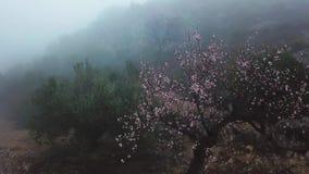 Vistas místicas del camino en niebla densa en las montañas de la península ibérica almacen de video