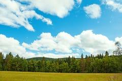 Vistas panorámicas del bosque negro con las nubes y el pino Imágenes de archivo libres de regalías