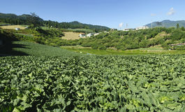 Vistas panorâmicos da exploração agrícola vegetal bonita. Imagem de Stock