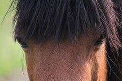 Vistazo del caballo Foto de archivo