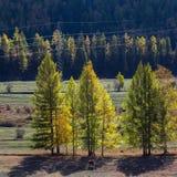 Viste dei paesaggi della Repubblica di Altai in autunno Fotografia Stock