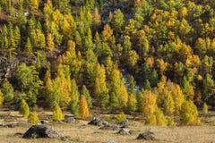Viste dei paesaggi della Repubblica di Altai in autunno Fotografia Stock Libera da Diritti