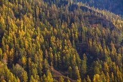 Viste dei paesaggi delle montagne in autunno, Repubblica di Altai Fotografia Stock