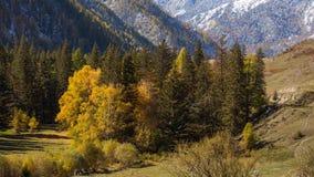 Viste dei paesaggi delle montagne di Altai in autunno Fotografie Stock Libere da Diritti