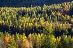 Viste dei paesaggi di Altay Mountains in autunno, Repubblica di Altai Fotografia Stock