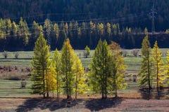 Viste dei paesaggi di Altay Mountains in autunno, Repubblica di Altai Fotografia Stock Libera da Diritti
