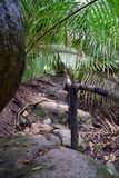 Viste del fiume e della cascata della giungla dalla piccola strada rurale del villaggio al EL l'Eden da Puerto Vallarta Messico i Fotografia Stock