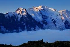 Viste del ghiacciaio di Mont Blanc da bacca Blanc Attrazione turistica popolare Scena pittoresca e splendida della montagna immagini stock libere da diritti
