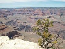 Viste del grande canyon Fotografie Stock Libere da Diritti