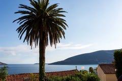 Viste del mare attraverso le palme alte nel Montenegro Immagine Stock