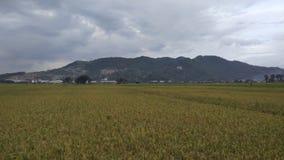 Viste del paesaggio delle risaie con il bello fondo della montagna fotografia stock libera da diritti