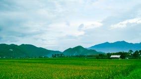 Viste del paesaggio delle risaie con il bello fondo della montagna immagini stock