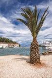 Viste della Croazia Palma sull'isola Hvar Fotografie Stock Libere da Diritti