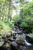 Viste della foresta Fotografia Stock
